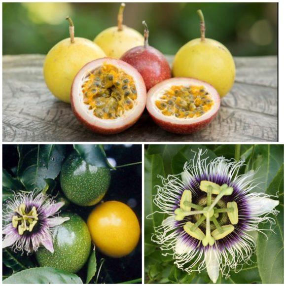 Frutto della Passione, energia naturale che definisce uno dei classici Douce